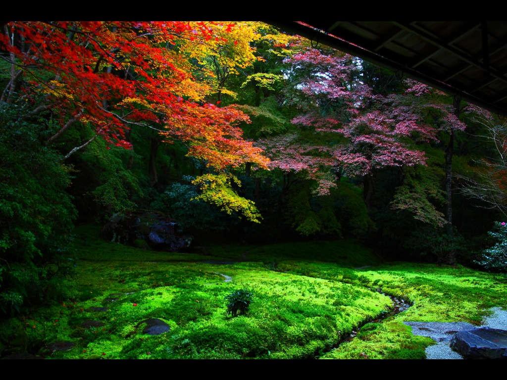 瑠璃光院 紅葉